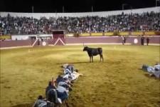 Stierkampf ein wenig anderer Art