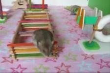 Mäuse-Parcour