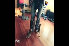 Kittens Attack - Kätzchen Angriff