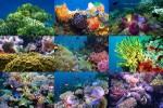 Korallen-Traum.pps auf www.funpot.net