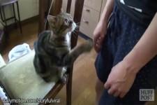 Katzen wollen gestreichelt werden