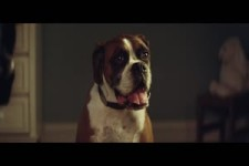 John Lewis Christmas Advert 2016 - BusterTheBoxer