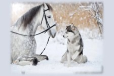 Humans & Animals - Menschen & Tiere