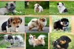 Hundewelpen.pps auf www.funpot.net
