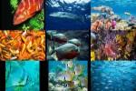Fische-2.ppsx auf www.funpot.net