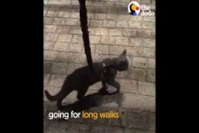 ADORABLE Cat Stinkie Loves Doing Dog Things -