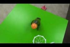 20 Tricks mit dem Papagei