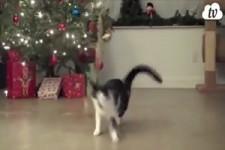 Katzen unterm Tannenbaum