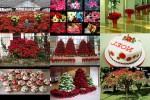 Weihnachtssterne-.pps auf www.funpot.net