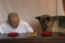 Mensch gegen Hund