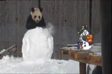 Panda und Schneemann