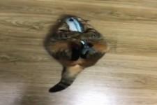 Die Katze und ihr Fisch