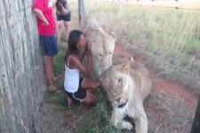 Ein Kuss mit dem Löwen
