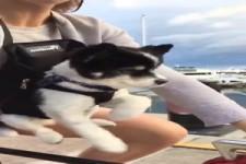 Hund fährt Rad