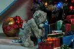 Frohe-Weihnachten-vom-Bärchen.mp4 auf www.funpot.net