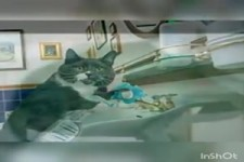 Aus dem Leben einer Katze