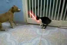 Die Katze mit dem Laserschwert