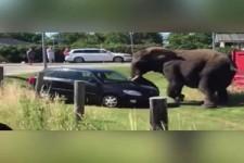 Wenn Tiere durchdrehen