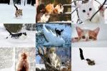 Cats-in-Winter-2---Katzen-im-Winter-2.ppsx auf www.funpot.net