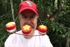 Kolibri-Fütterung auf Augenhöhe