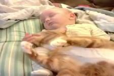 Babys und Katzen