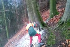 Sehr gefährlich - Baum fällt