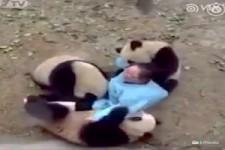 Pandabärchen