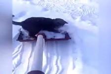 Katzen und Schnee