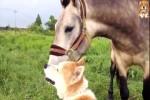 Tierfreundschaften.mp4 auf www.funpot.net