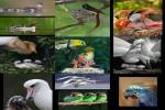Schöne-Vögel.pps auf www.funpot.net