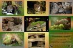 APODEMUS---Small-Wood-Mouse---Kleine-Waldmaus.pps auf www.funpot.net