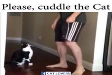 bitte, schmuse mit der Katze