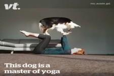 Der Yoga-Hund