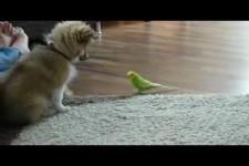 Hund Welpe spielt mit Wellensittich