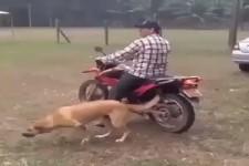 Mopedhund