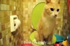 Geniale Katze am WC