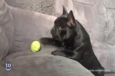 Hunde-Hoppalas in Zeitlupe