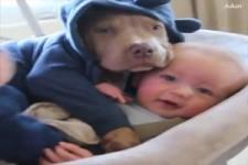 Babys und ihre tierischen Begleiter