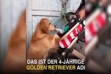 die Hundefamilie