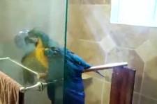 Papagei beim Duschen