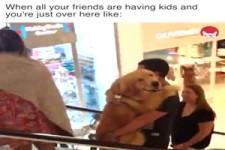 wenn all deine Freunde Hunde haben und du gerade hier bist!!