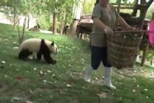 Pandas Ma