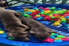 Bällebad für Hunde