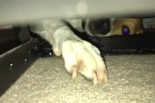 Leckerli unterm Sofa
