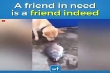 Der Freund im Not ist der wahre Freund