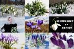 Messengers-of-Spring---Boten-des-Frühlings.ppsx auf www.funpot.net
