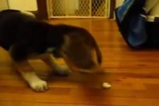 Kleiner Hund dreht wegen Popcorn durch