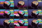 Weibliches-Gehirn.pps auf www.funpot.net