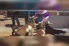Kinder & Tiere