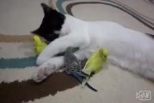Katze und ihre Freunde